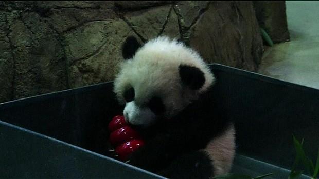 O filhote de panda Bei Bei, no zoológico da Instituição Smithsonian, em Washington (Foto: Reuters)
