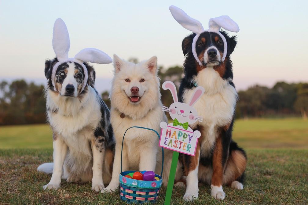 Chocolate tem substância que causa intoxicação para cachorros (Foto: Spiritze/Pixabay)