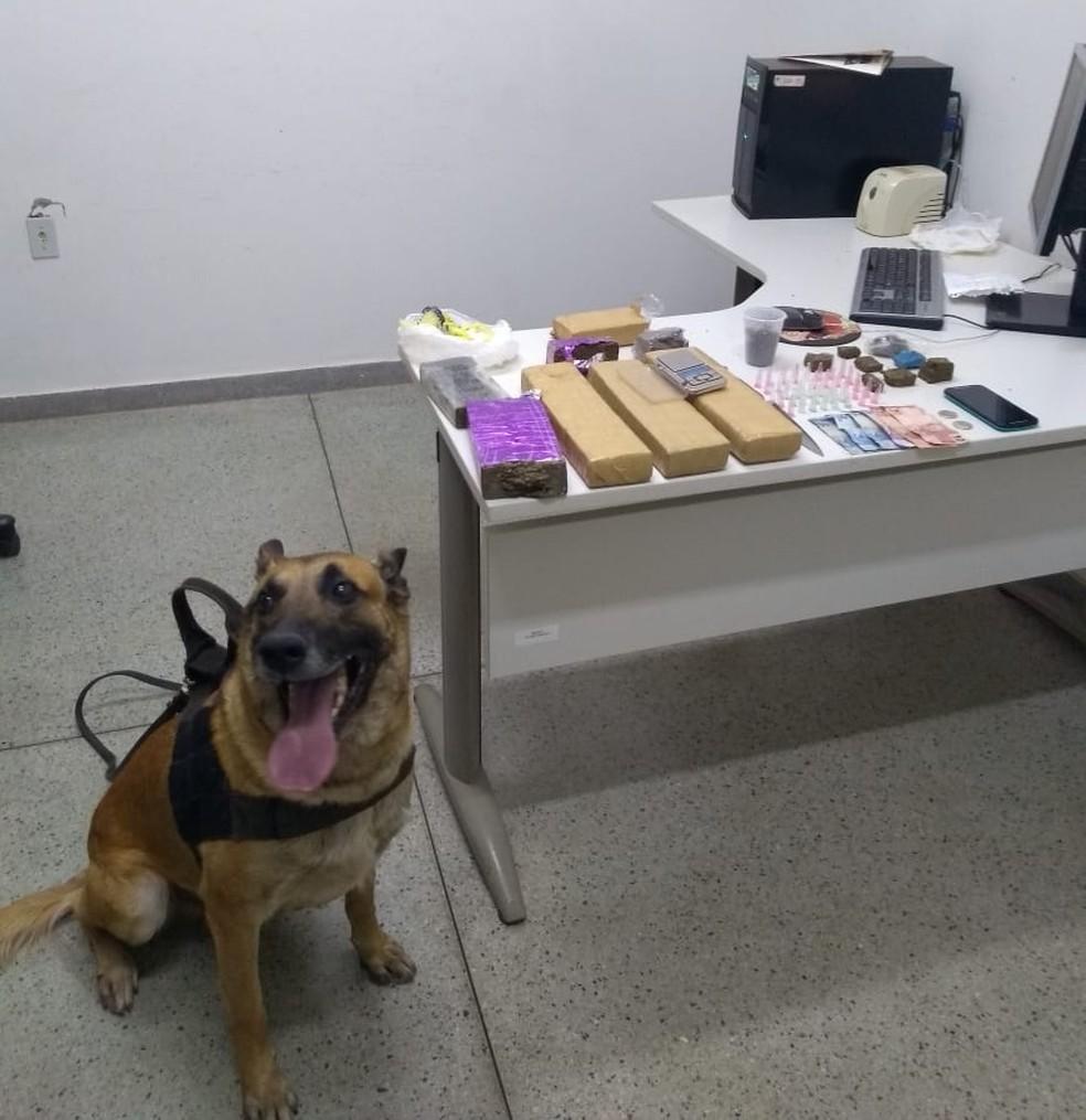 Cão farejador foi usado na operação. — Foto: Divulgação/Polícia Militar