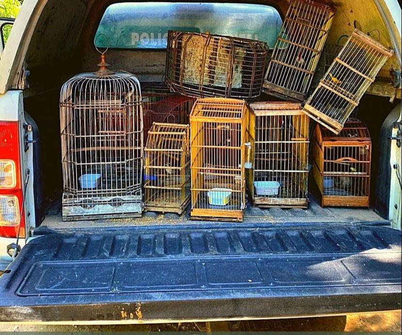 Mais de 120 aves silvestres são resgatadas em feiras livres no interior de Alagoas