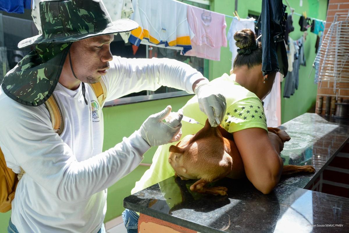 Após registro de caso de raiva, mais de 3,4 mil cães e gatos são vacinados em Boa Vista - Noticias