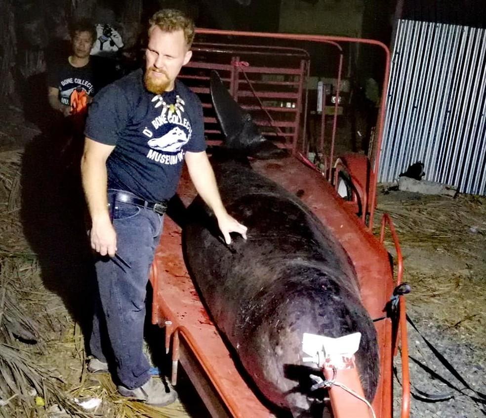 Baleia encontrada morta nas Filipinas tinha plástico no estômago — Foto: D'Bone Museum/Facebook