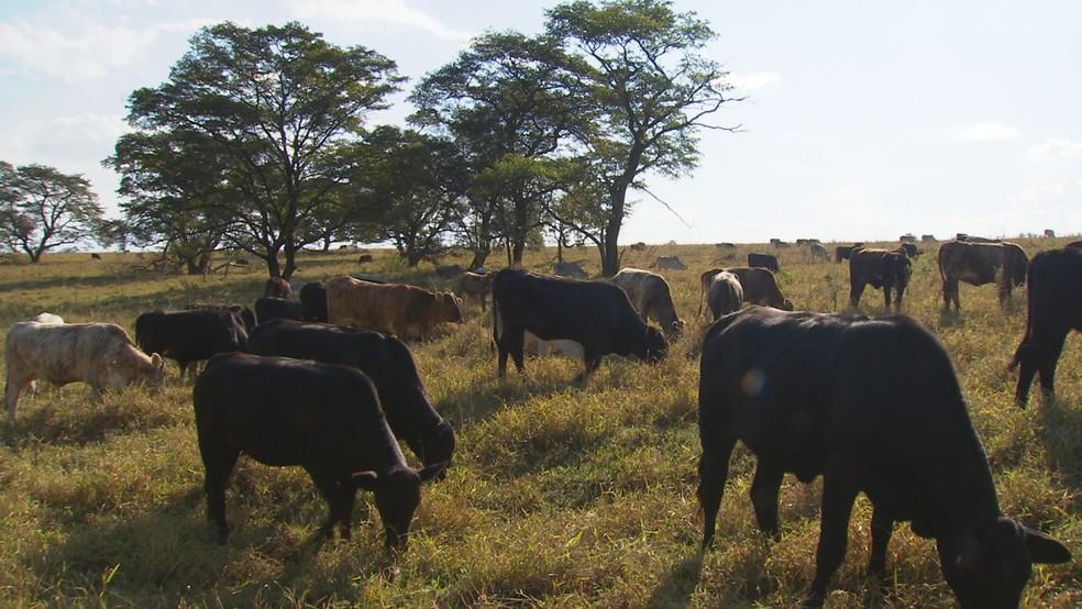 Exportações de carne bovina atravessam bom momento — Foto: Reprodução/TV TEM