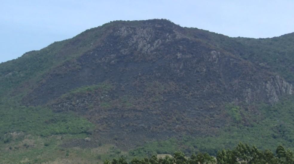 Incêndio na Serra da Pedra Branca pode ter destruído espécie de samambaia (Foto: Reprodução EPTV)