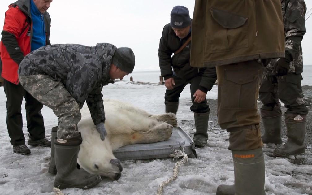 Equipe de resgate prepara o urso-polar para transporte após sedá-lo com tranquilizante na vila de Tilichiki — Foto: AP Photo