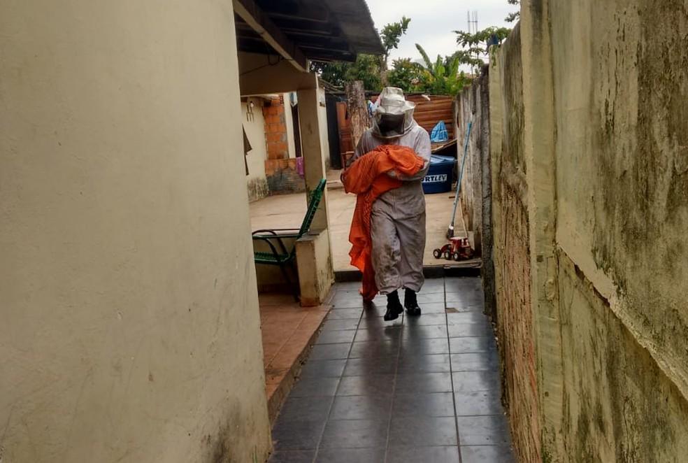 Apicultor trabalhou para conter abelhas em Rondonópolis (Foto: Divulgação)