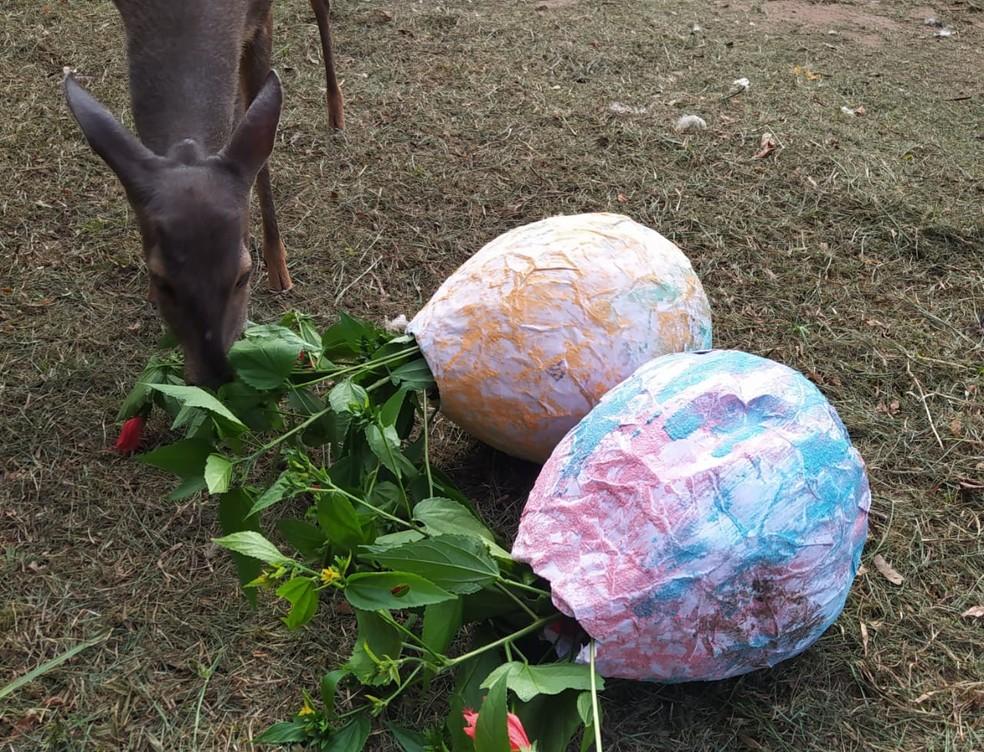 Cada espécie foi presenteada com um ovo de Páscoa em Bauru — Foto: Prefeitura de Bauru/Divulgação
