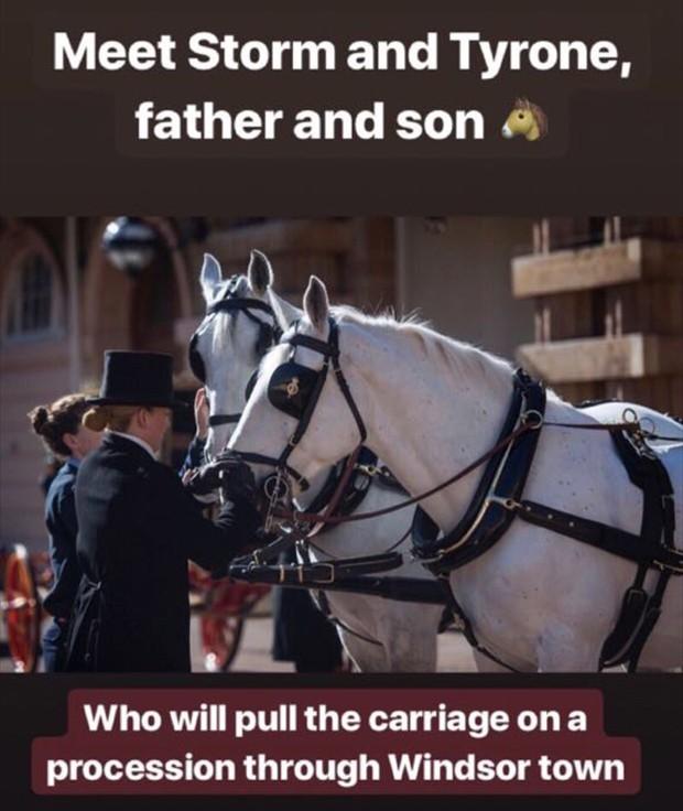 Cavalos Reais (Foto: Reprodução/Instagram)