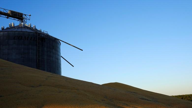 agricultura-milho-sorriso-mt (Foto: Reuters/Nacho Doce)