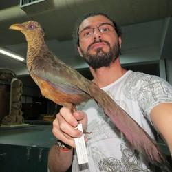 Marco Aurélio Crozariol