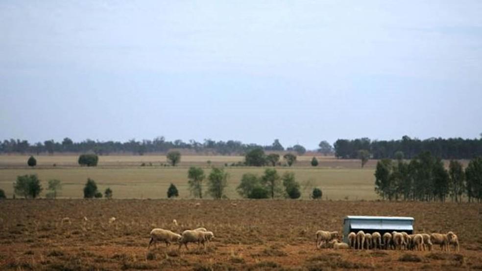 MacDonald até hoje se dedica a sua granja de ovelhas na Austrália (Foto: Getty Images)