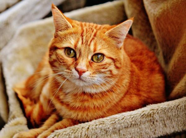 A mãe procurava por um gato amarelo emprestado, porque seus filhos queriam jantar com o Garfield (Foto: Reprodução/ Facebook)