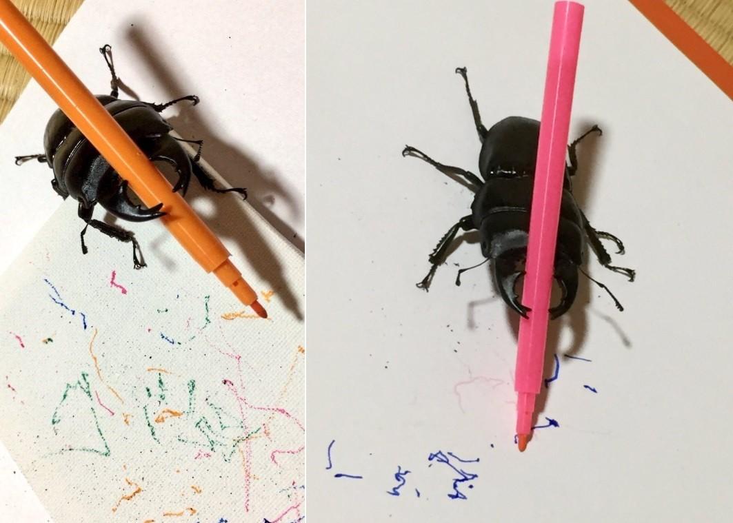 O trabalho artístico do besouro Mandy
