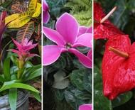 10 flores com boa oferta para comprar em maio!