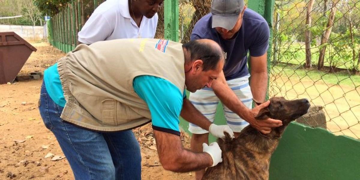 Campanha de vacinação antirrábica na Penha, em Campos, RJ, termina nesta sexta