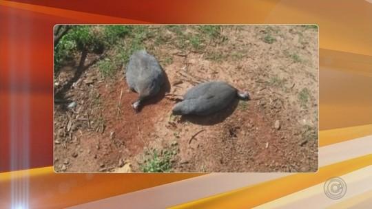 Morador é multado em R$ 282 mil ao deixar animais sem alimento por uma semana em Marapoama