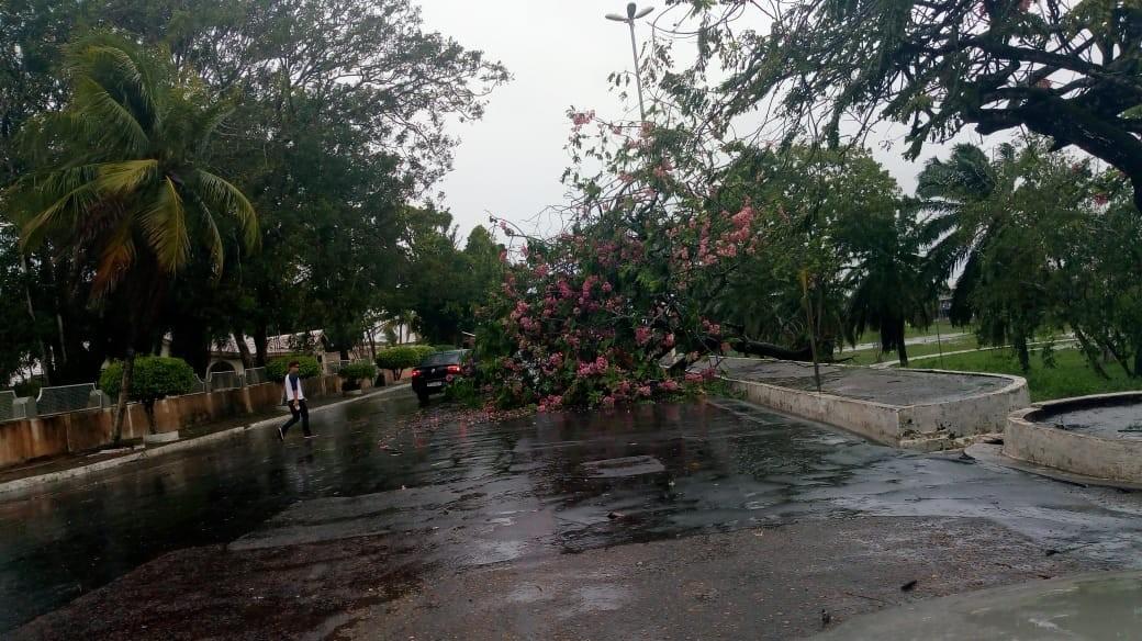 Temporal com ventania derruba árvores em Macapá e causa prejuízos