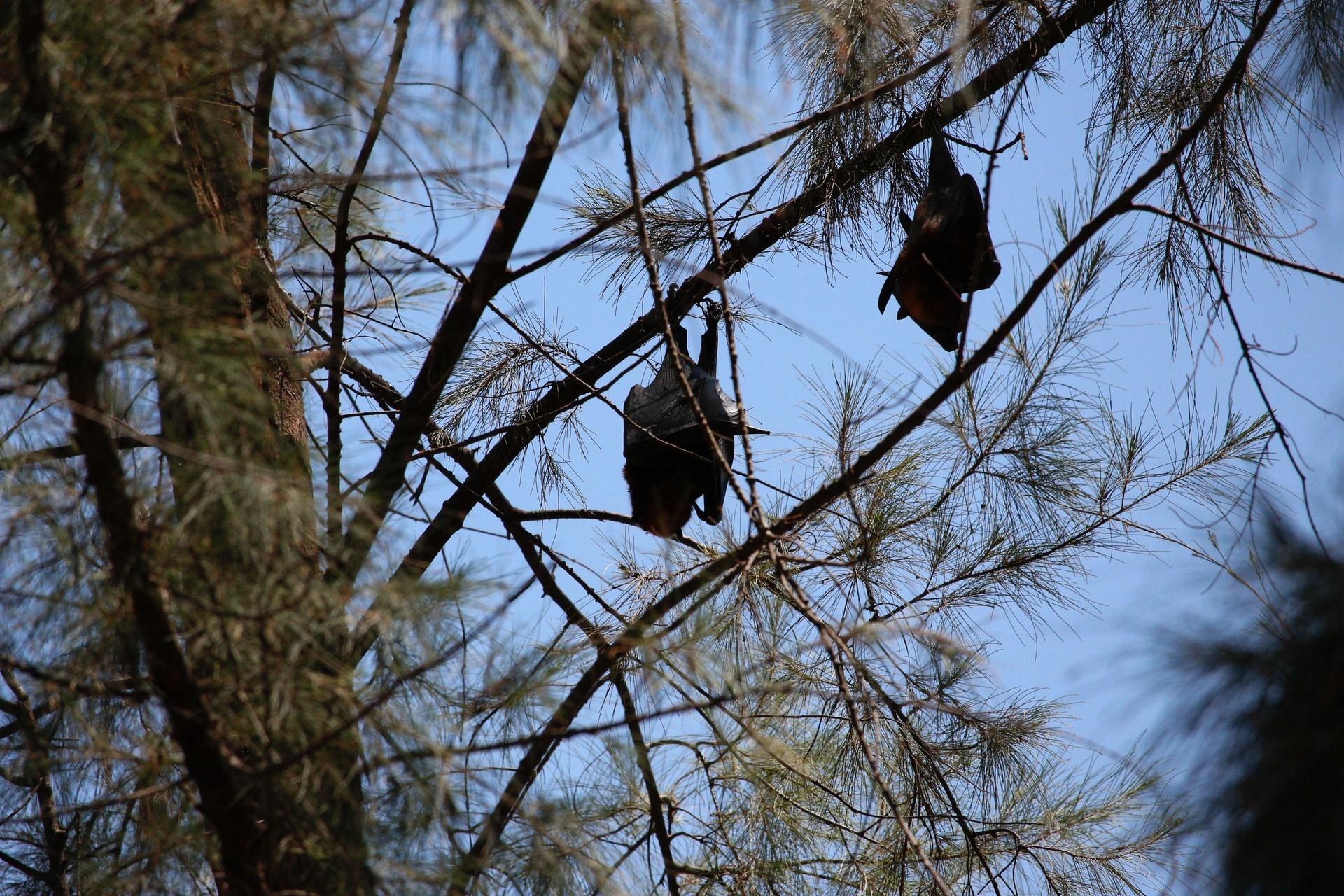 Estudo indica que 40 espécies de morcegos migraram para a província de Yunnan no último século (Foto:  Jackie Chin/Unsplash)
