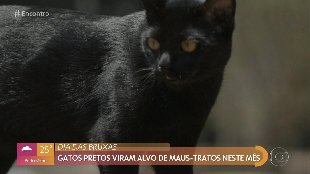 Preconceito contra gatos pretos vem desde a idade média