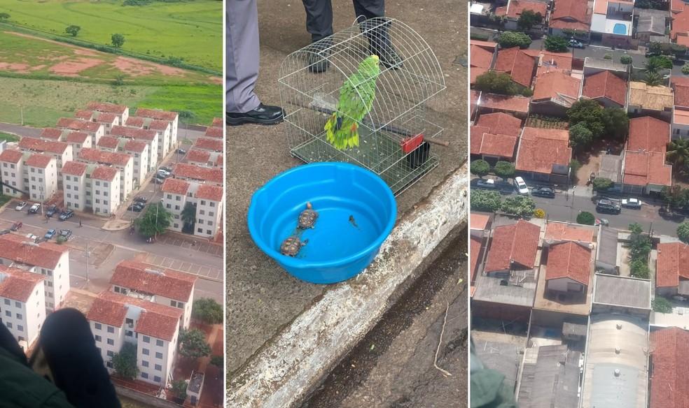 Helicóptero Águia, da PM, deu apoio em várias regiões de Lins, como no Conjunto Habitacional Franco Montoro (à esq); animais silvestres irregulares também foram apreendidos — Foto: Polícia Civil/Divulgação