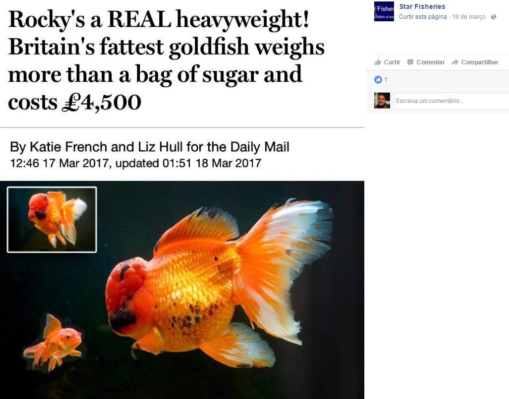 Rocky comparada a um peixe dourado de tamanho normal