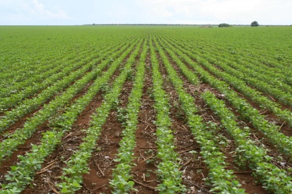 Terra plana tem atraído produtores de outros estados — Foto: Amanda Sampaio/G1 MT
