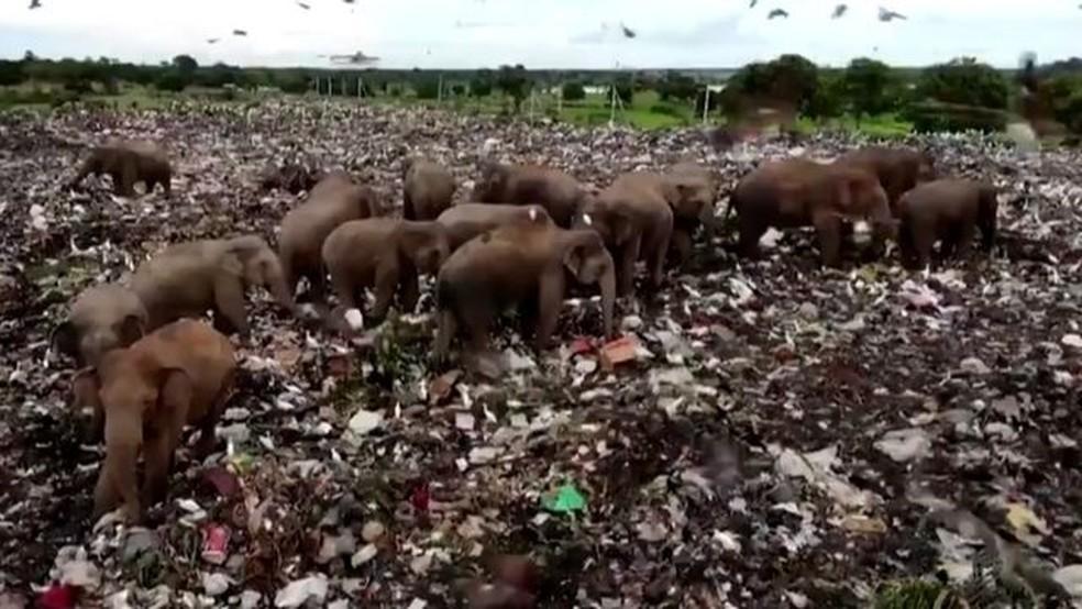 Os elefantes têm invadido um aterro sanitário em busca de comida — Foto: Reuters via BBC