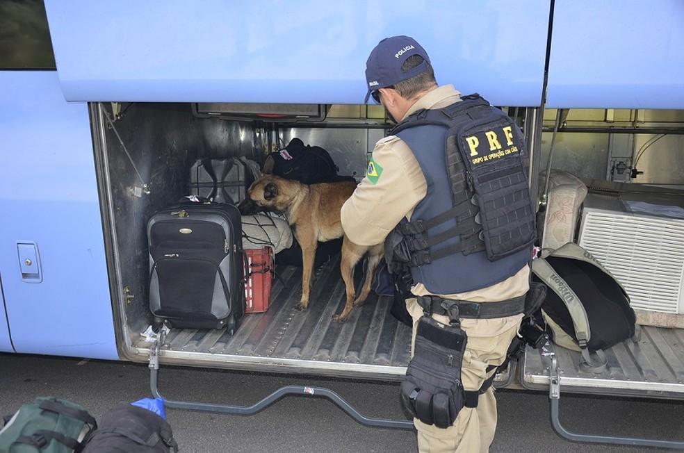 Cães ajudaram agentes na fiscalização de bagagens em ônibus que circularam pelas rodovias federais em Pernambuco, durante o feriadão da Independência (Foto: Ascom PRF/Divulgação)