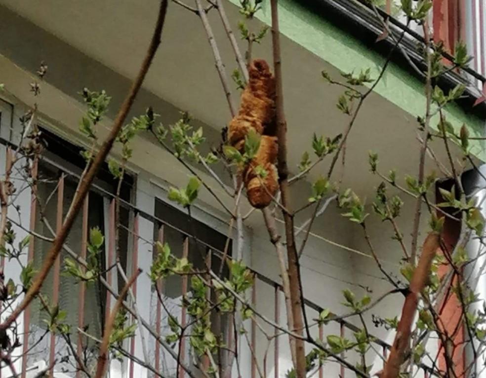 Autoridades receberam chamado e investigaram denúncia em Cracóvia de que moradores não estavam abrindo janelas com medo do 'bicho' — Foto: Reprodução/Facebook