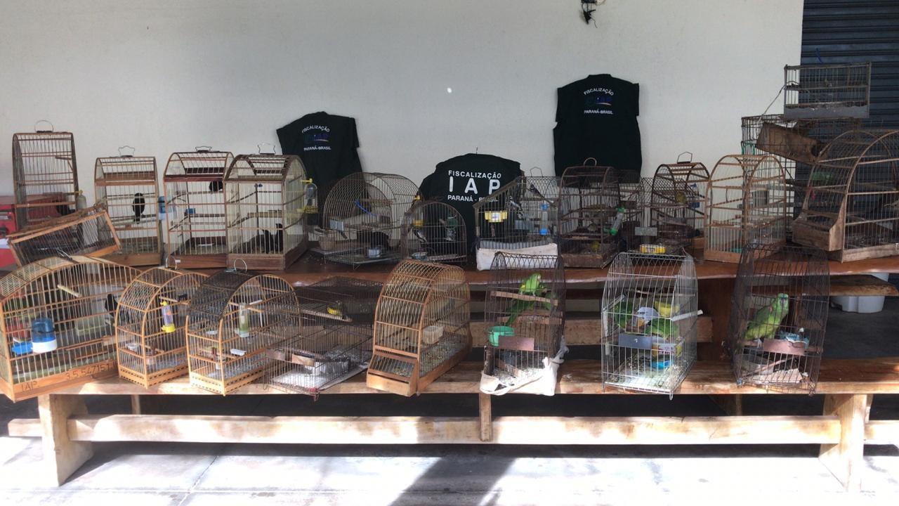 IAP resgata 34 pássaros silvestres em seis cidades do noroeste do Paraná - Noticias