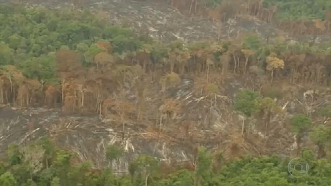 Desmatamento na Amazônia em 2020 foi o maior dos últimos 10 anos