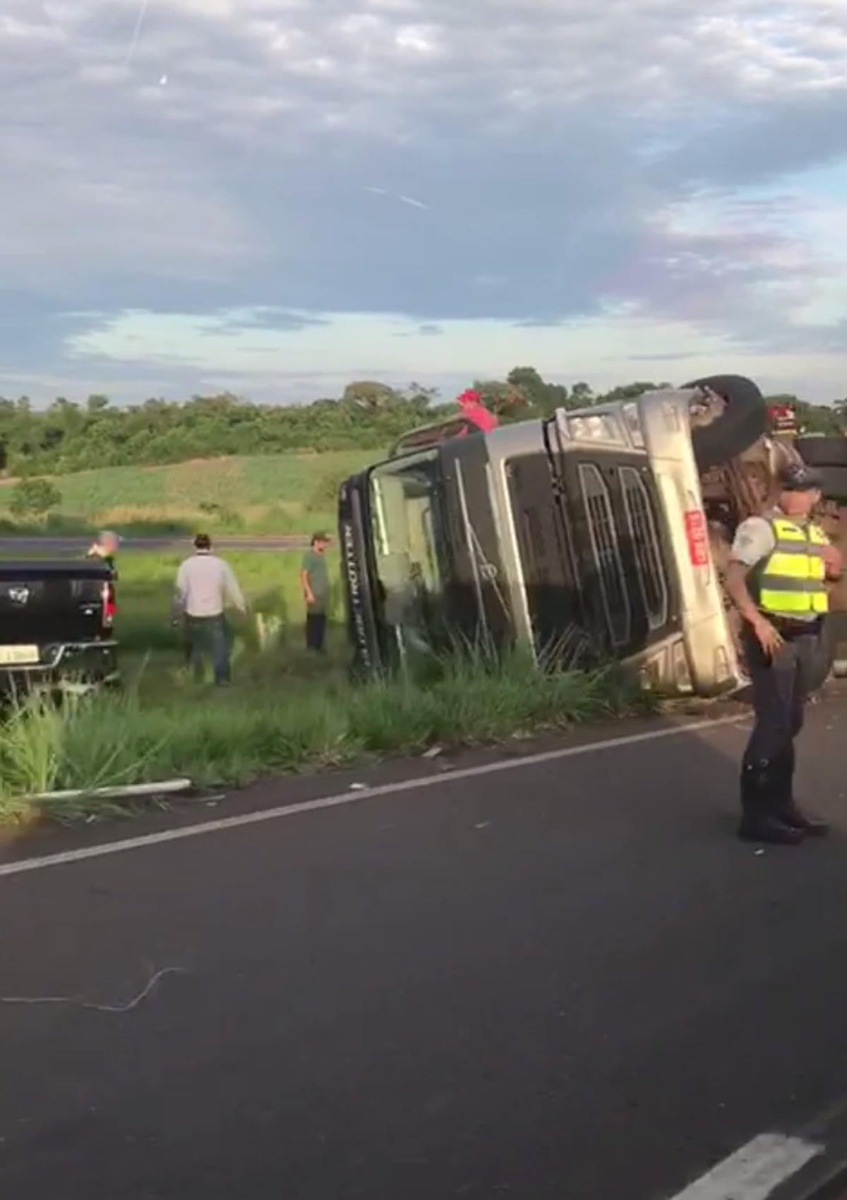 Caminhão carregado com bois tomba e animais morrem em rodovia de Sales - G1
