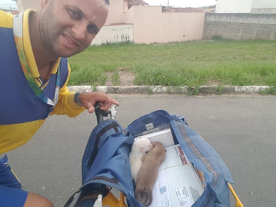 O carteiro postou nas suas redes as fotos com os cachorrinhos que encontrou (Foto: Facebook / Carteiro Amigos dos Animais)
