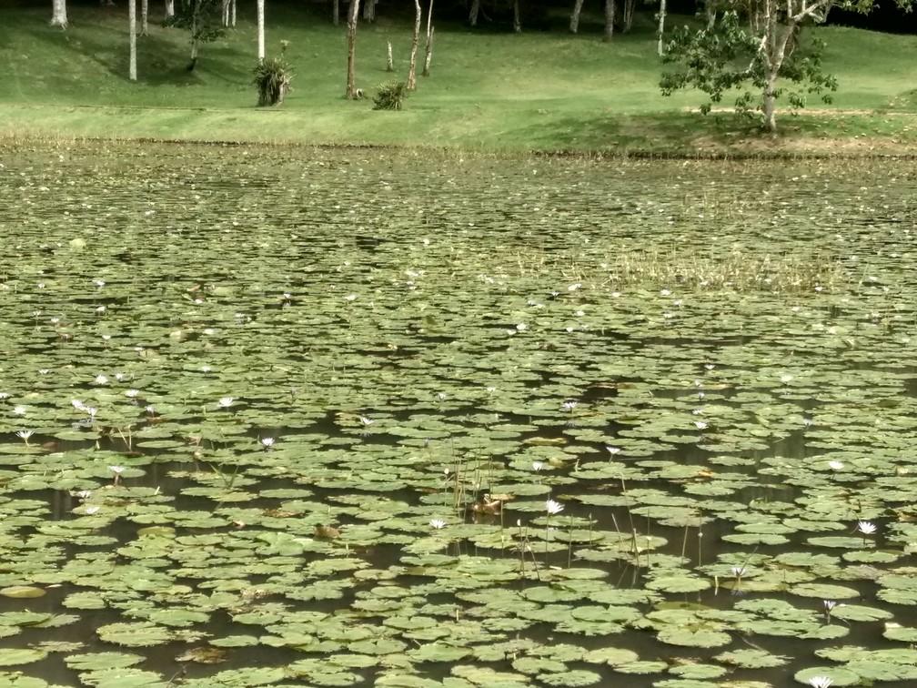 Detalhe de um dos lagos do Jardim Botânico da Universidade Federal de Juiz de Fora (UFJF) — Foto: Roberta Oliveira/G1