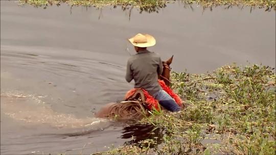 Cavalo gera negócios de R$ 16 bilhões  por ano no Brasil