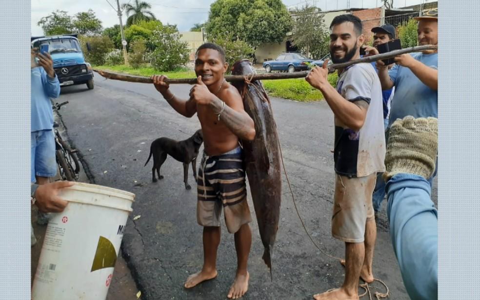 O azulejista Igor Ferreira (direita) e o amigo carregam a carpa de 36 kg em Taquaritinga, SP — Foto: Reprodução/EPTV