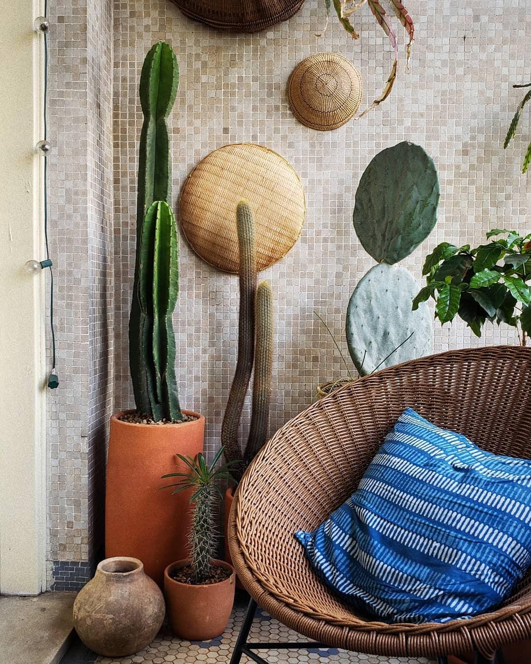 Como cuidar das plantas no inverno?  (Foto: Lucas Midio/Instagram)