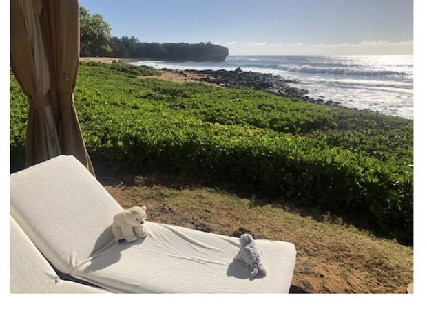Sutro e seu companheiro Kauai relaxando perto da piscina (Foto: Twittter / annapickard)