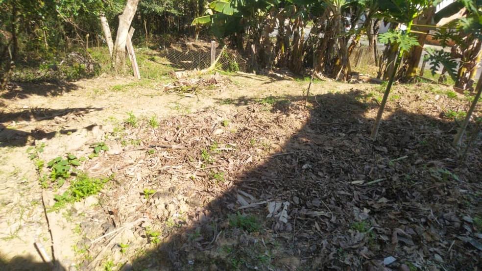 Plantação de moradora de Sorocaba foi prejudicada por bodes — Foto: Luciana Vidigal/Arquivo pessoal