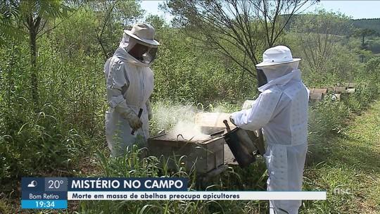 Morte de milhares de abelhas no Planalto Norte de SC é mistério