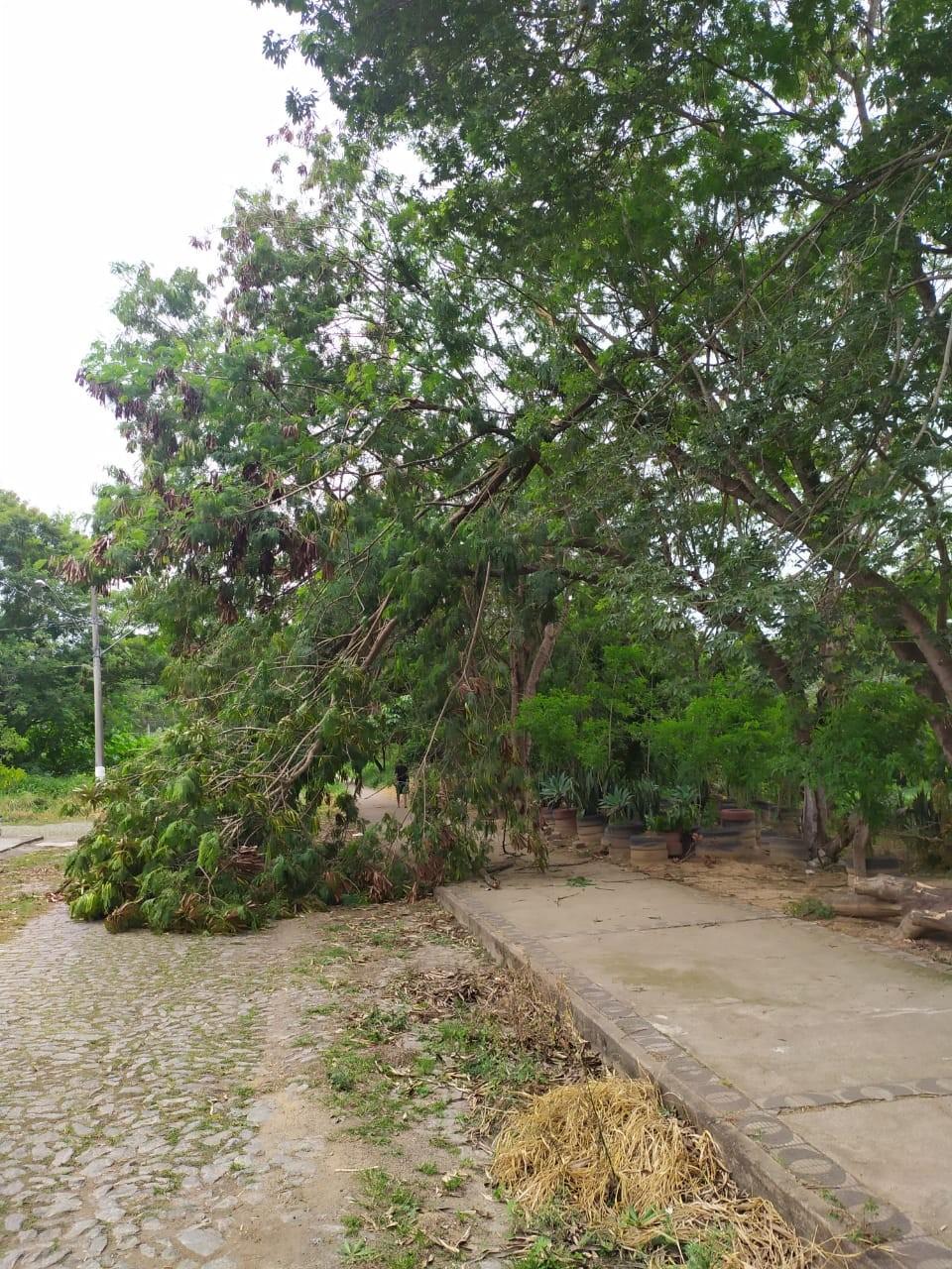 Instabilidade no fornecimento de energia, quedas de árvores e motos  são registradas após chuva em Divinópolis
