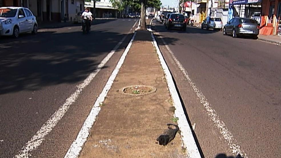 -  Macaco foi achado em canteiro central da avenida  Foto: Reprodução/TV Integração