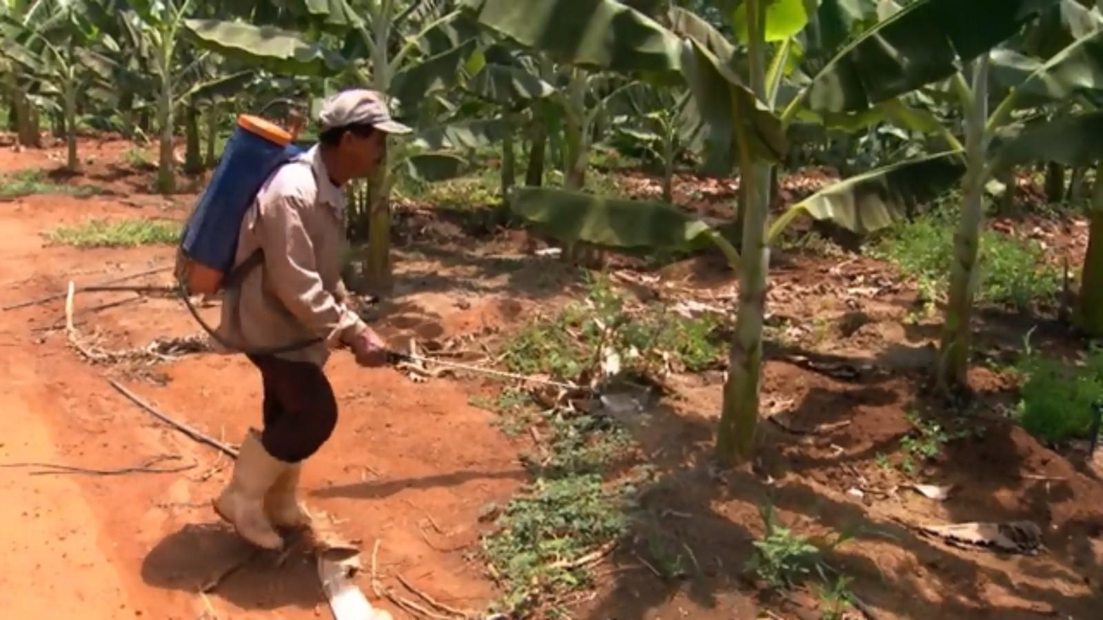 A monocultura e os agrotóxicos no banco dos réus