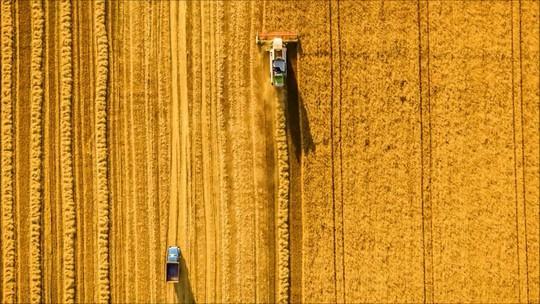 Você conhece o agronegócio brasileiro?