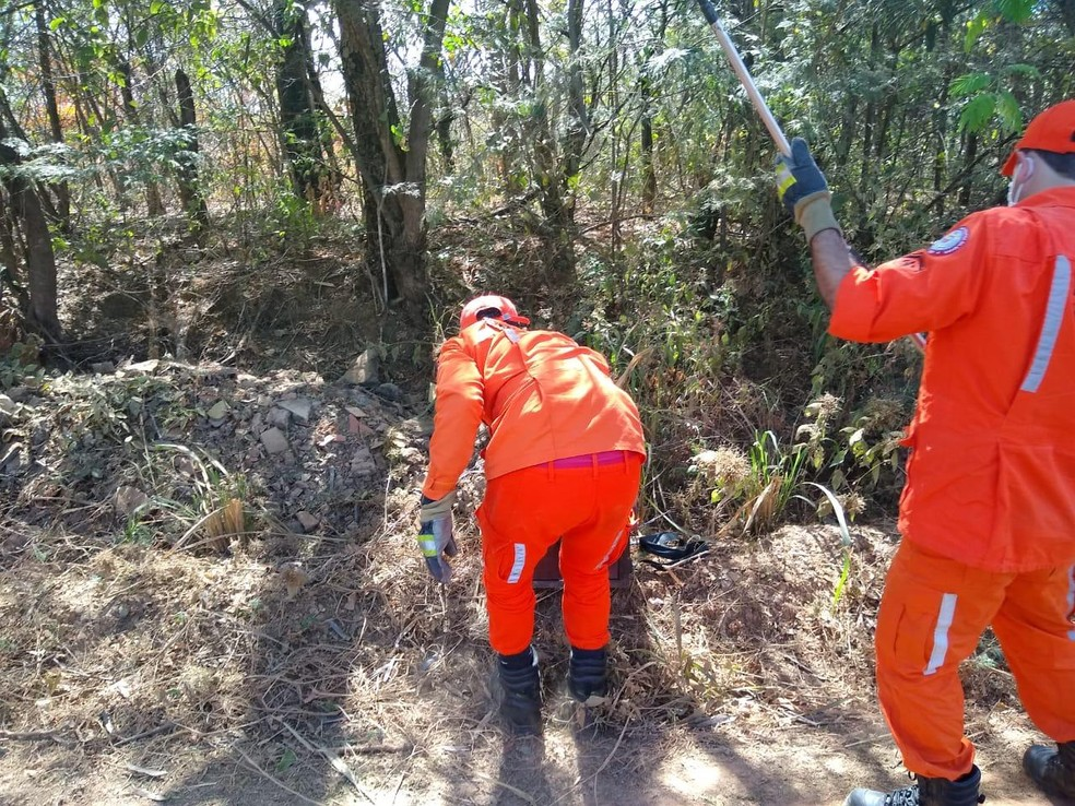 Bombeiros devolveram animal à natureza após captura — Foto: Corpo de Bombeiros/ Divulgação