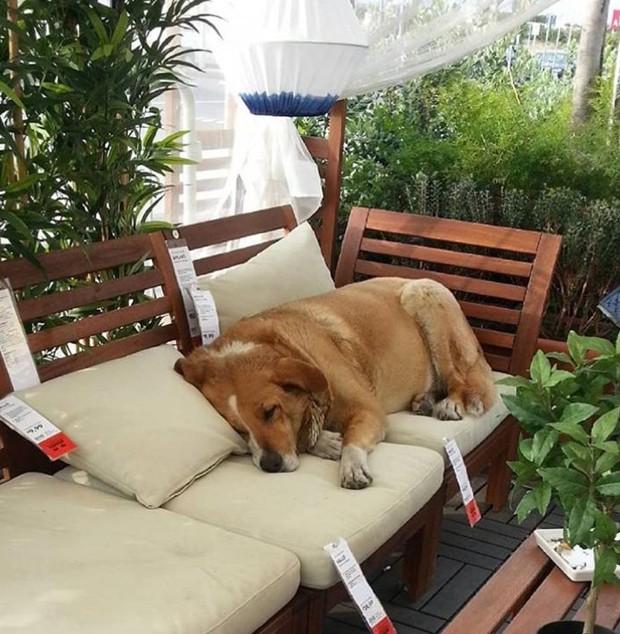 Sofás, tapetes, cadeira e outros móveis aconchegam os cães (Foto: Instagram/ Reprodução)