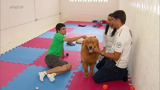 Terapias com cavalos e cachorros estimulam desenvolvimento de crianças