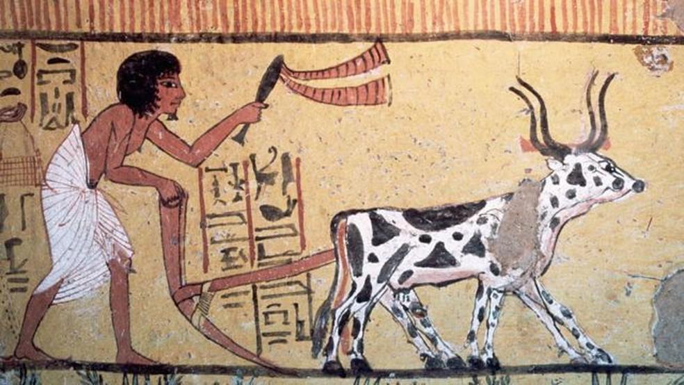 Um passo em falso na revolução agrícola e o futuro de nossa civilização teria sido muito diferente — Foto: Getty Images via BBC