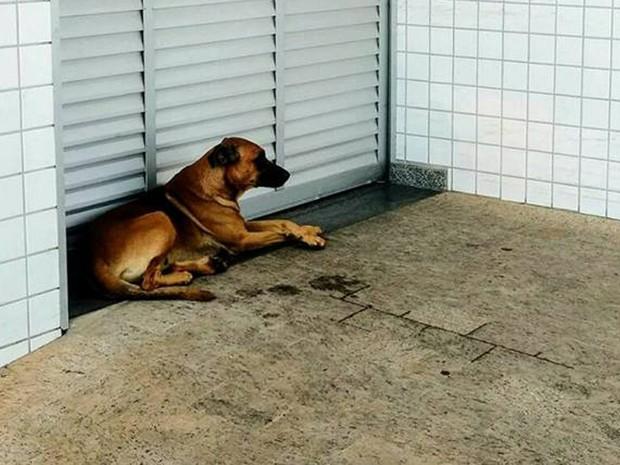 Cão aguarda dono que está internado em UTI de hospital de Limeira (Foto: Reprodução Facebook/Alpa)