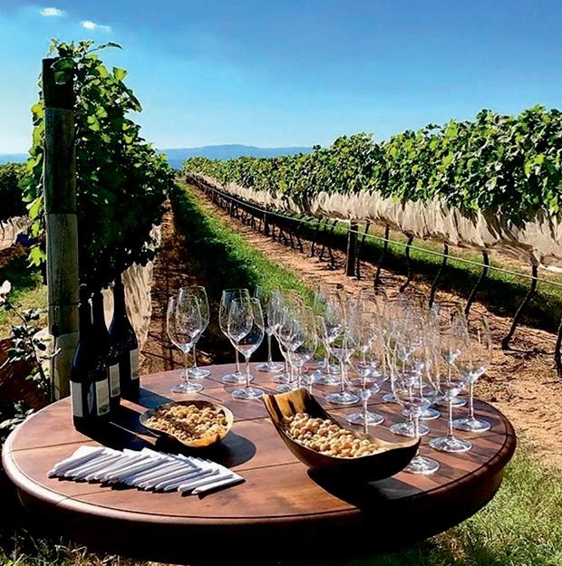 Uma seleção de vinhos da safra de 2017 (Foto: Divulgação)
